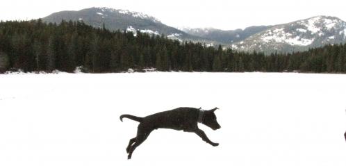 puppy whistler