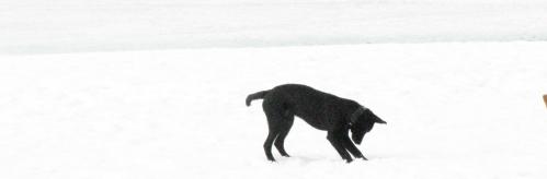 puppy snow