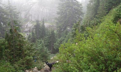mount-seymour-peak-hike