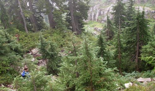 mt-seymour-peak-hike