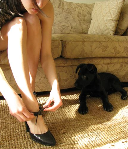 black-lab-puppy-shoes