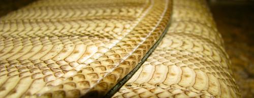 snake-skin-purse1