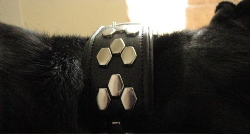 leather-dog-collar-studs